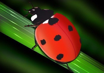 lady bugs for luck