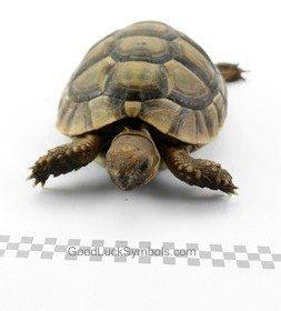 Tortoise symbolism