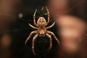Spider Symbolism