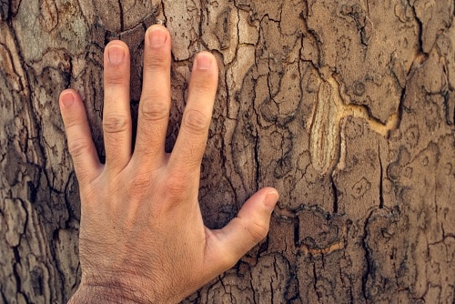 touch wood meaning
