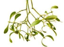 mistletoe symbolism