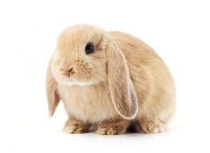 rabbit superstitions and symbolism