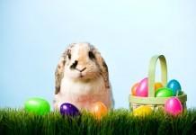 Easter eggs story