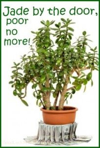 Jade Plant Money Plant