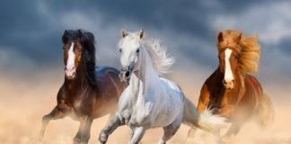 horses good luck symbol