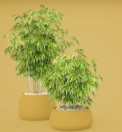 bamboo potted luck