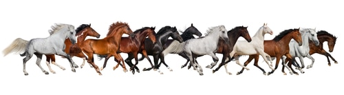 horses good luck picture