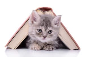 cat lucky for writers