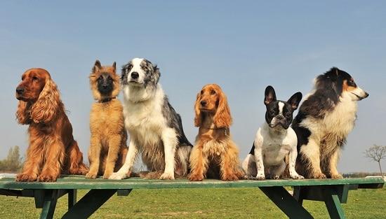 dog animal symbolism