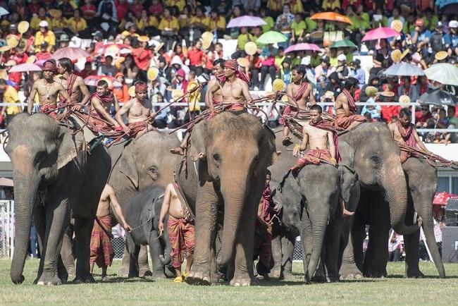 Surin Elephant festival Thailand