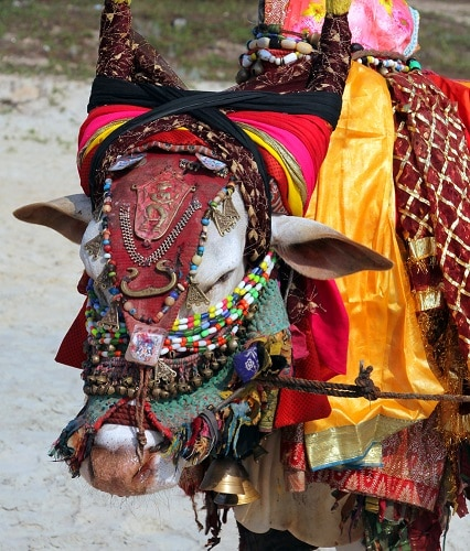 Top 10 Superstitious Festivals in India