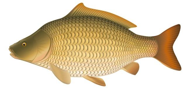 carp good luck