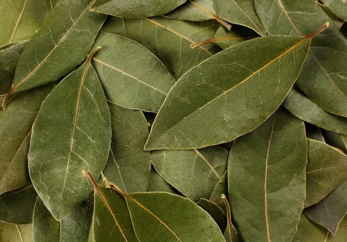 Bay leaf mythology
