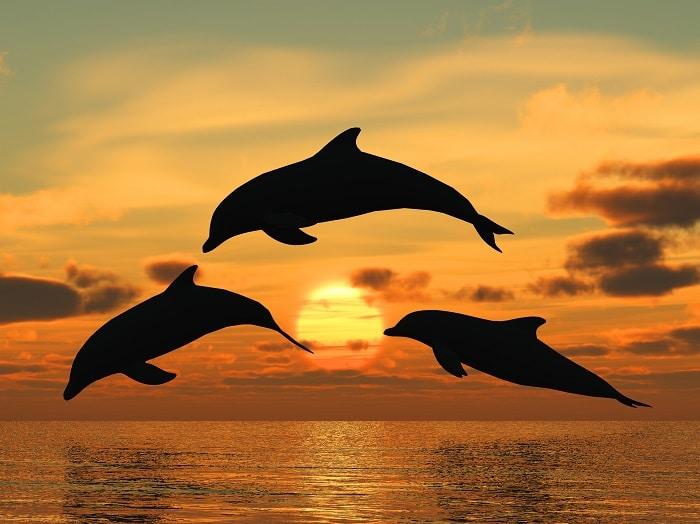 Dolphins symbolism