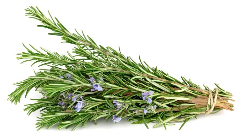 Rosemary folklore