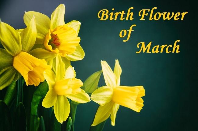 Birth flower March